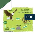 CADENA ALIMENTICIA.docx
