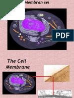 lect2-membran sel.ppt