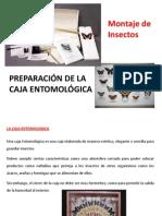 Preparación de La Caja Entomológica