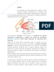 tejido muscularsaassasa