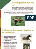1el-aparato-digestivo-de-los-rumiantes-1208718337519648-8.ppt