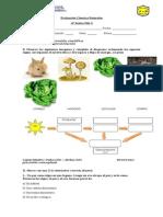 Fotosíntesis y Cadenas alimentarias