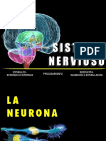 Sistema Nervioso B