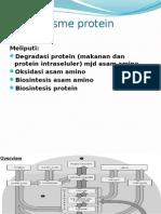 1.Katabolisme Protein zzzzzz