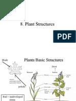 8.Plant+Structure