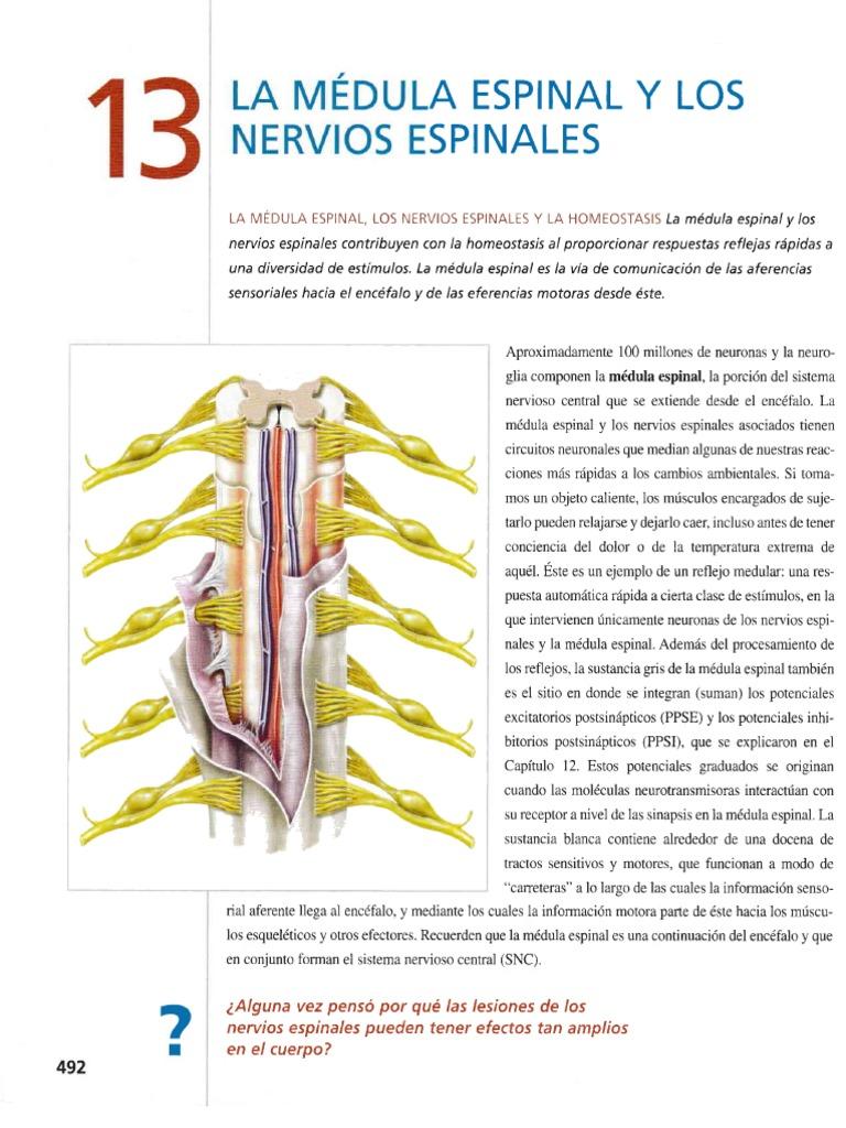 Excepcional La Anatomía Y La Fisiología ósea Motivo - Anatomía de ...