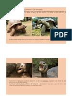 Aprendemos de Tortugas