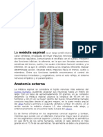Medula Espinal - InFO 1