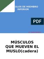 Copia de Musculos Del Miembro Inferior