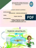 Diapositiva de Botanica
