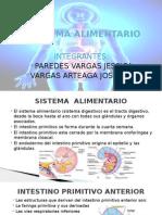 Sistema Alimentario - Embriologia