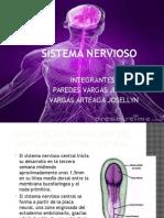 Sistema Nervioso - Embriologia