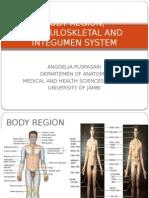 anatomi musculosceletal.pptx