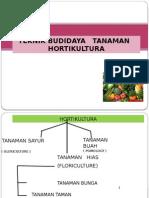 Budidaya Hortikultura