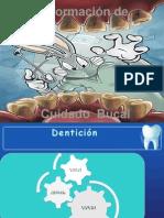 rotafolio informatio dental