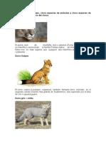 Animales y Plantas Del Choco