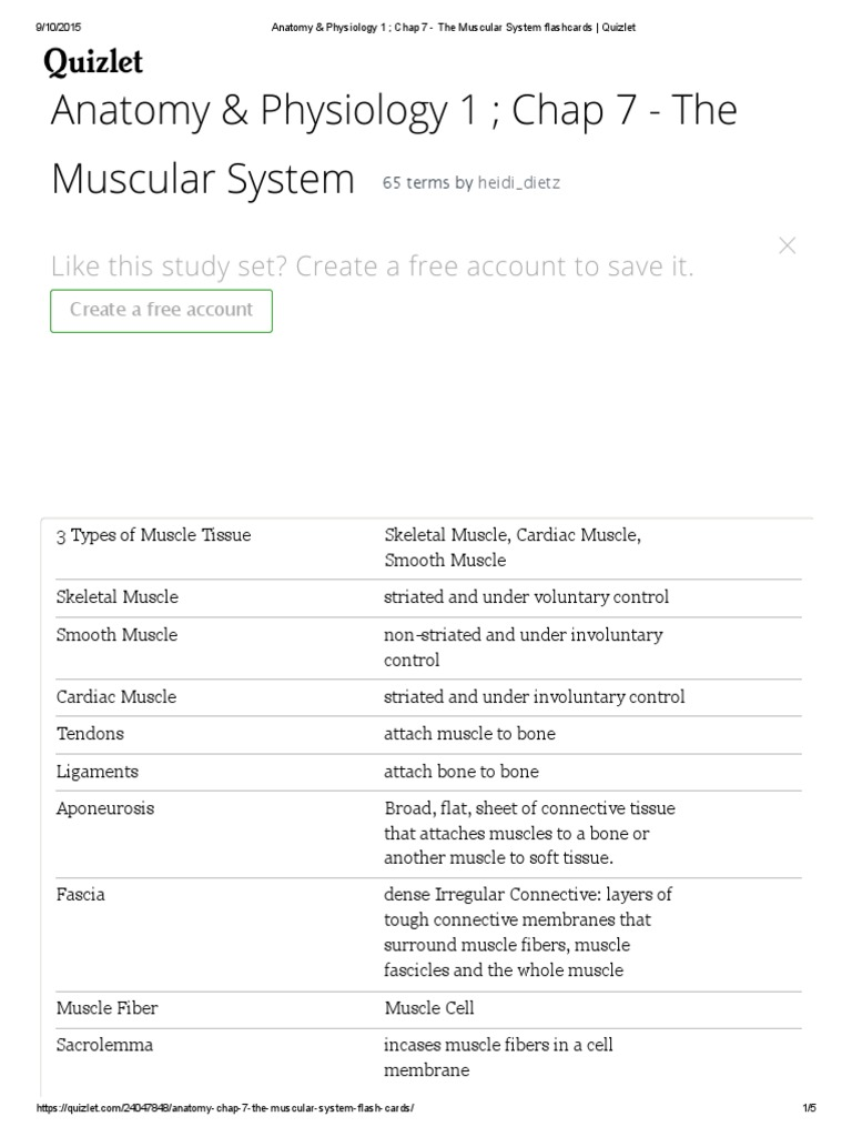 Anatomy & Physiology the Muscular System Flashcards _ Quizlet ...