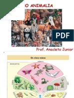 Reino Animalia - Prof. Anacleto.ppt