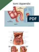 Anatomi Appendix