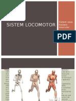 Sistem Locomotor