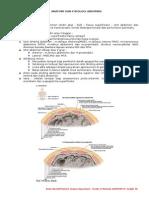 Anatomi Fisiologi Abdomen