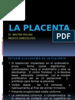 5 .- Ecografia Placenta - Cordon Umbilical