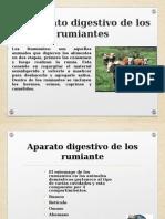 Anatomia Estomago de Los Rumiantes