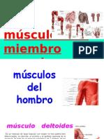 Musculos de Miembro Superior