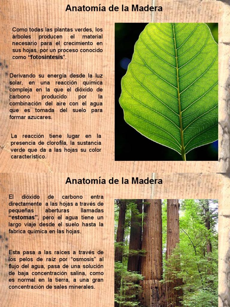 Anatomía de La Madera.
