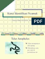identifikasi_nyamuk