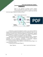 Amebas Patogenas y No Patogenas