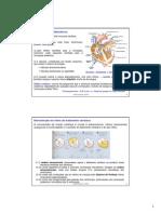 3. Sistema Cardiovascular Parte II