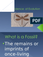 Evidence of Evolution Notes