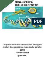 2 Org Mat Genetic