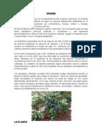 cultivo del arandano