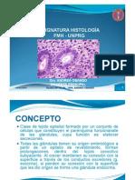Tejido Epitelial Glandular 2