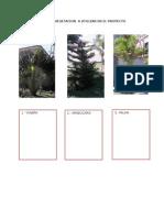Tipos de Vegetacion a Utilizar en El Proyecto