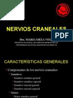 4.- NERVIOS CRANEALES