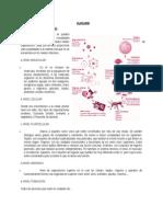 Niveles de Organizacion.doc