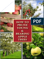 How to Prune Young and Bearing Apple Trees