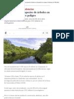 La Mitad de Las Especies de Árboles en El Amazonas Corre Peligro _ Tendencias _ LA TERCERA