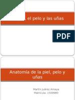 Exploracion de Piel.pptx