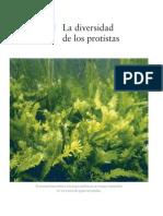 protistascap. 20