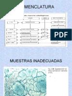 NOMENCLATURA2 Citología (1) (2).ppt