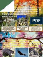 Paramo flora-fauna-distribucion.pptx