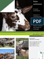 Caprinos e Ovinos - raças autóctones portuguesas