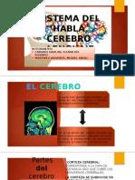 Sistema Del Habla Cerebro Lenguaje Diapo Final