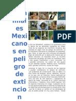 Animales Mexicanos en Peligro de Extición 3