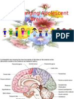 The Changing Adolescent Brain