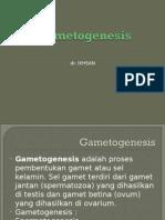 Gametogenesis.ppt